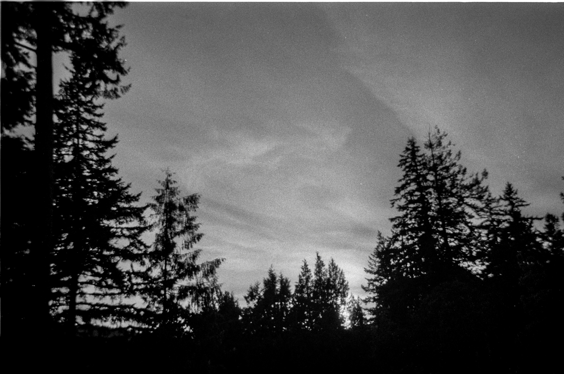 Will_Winter_Black_and_White_Disposable